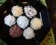 Reisvielfalt auf dem Feld – Genussvielfalt in der Küche