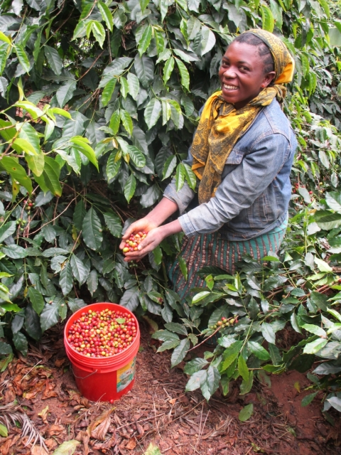 Wo der Petershausener Kaffee wächst – Eine Kaffee-Reise ins südwestliche Hochland von Tansania