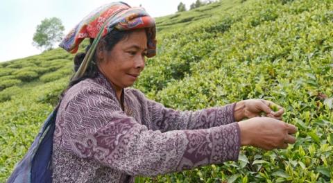 Fair gehandelter Tee stärkt Frauenrechte – Fairkaufladen beteiligt sich an der Fairen Woche 2019